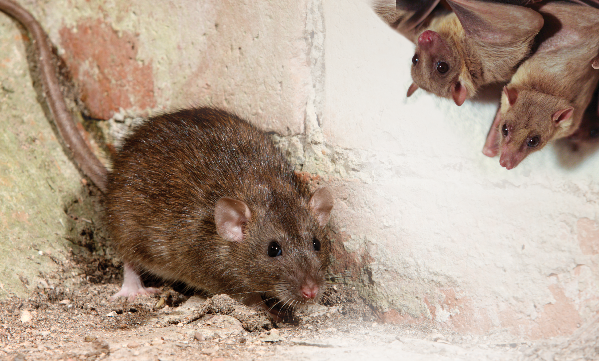 Mouse Proof Insulation : Pest resistant airkrete all green spray foam insulation